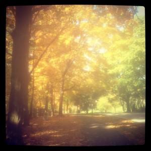 Breathtaking fall foliage in Cheltenham, PA